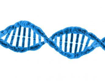 Firma epigenetica - Dna
