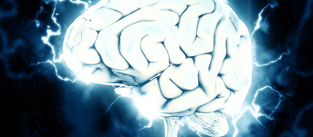 Netrina : proteina chiave aumenta la memoria, imparando nel cervello adulto