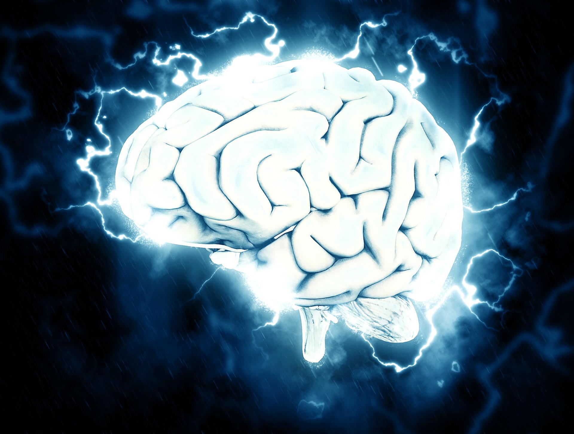 proteina netrina cervello adulto